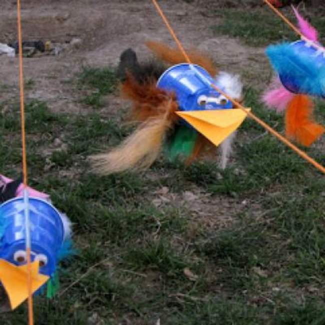 Bird Races Activity for Kids