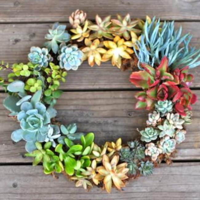 How to Make a Succulent Wreath {a wreath}