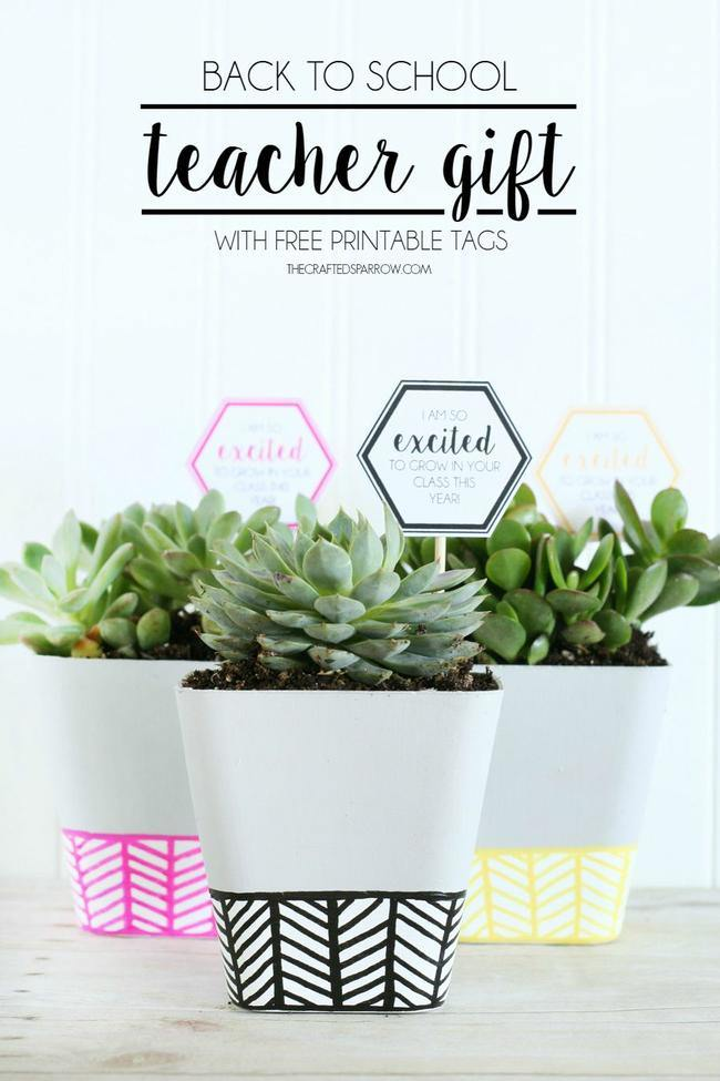 Succulent Back to School Gift Idea